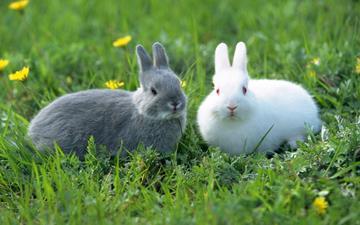 conejo gris y blanco tumbados en la hierba